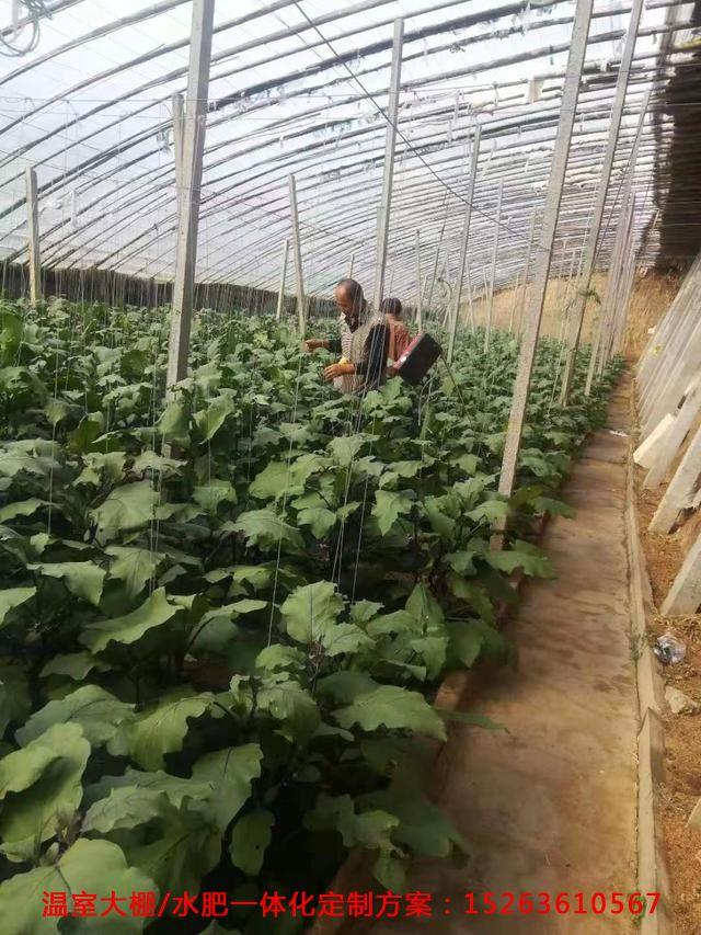 NCP疫情下蔬菜大棚种植户们的心声:我好难!